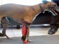 Animales beneficiados por protesis impresa
